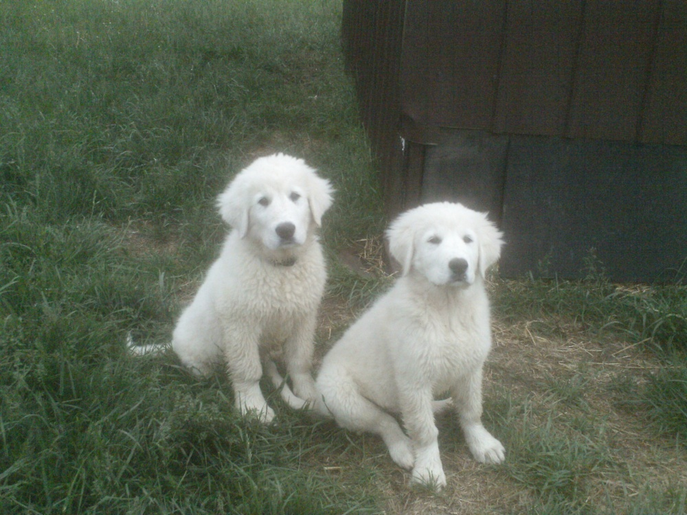 This is me with my brother.  i'm the most handsome one on the right.  Max